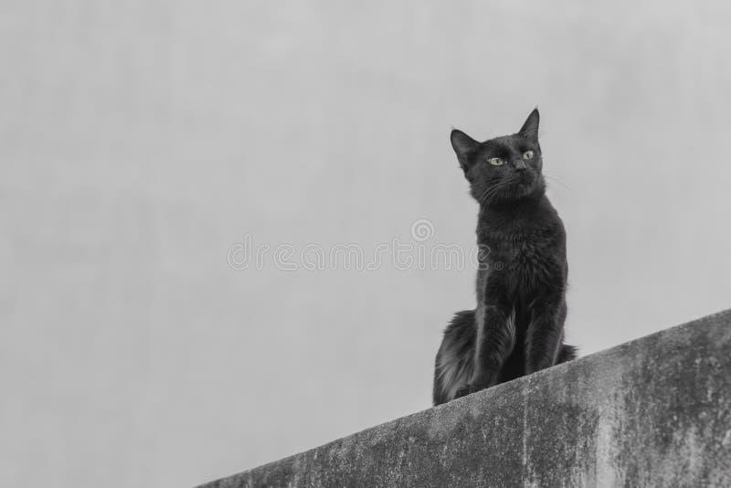 El gato que espera fotografía de archivo libre de regalías
