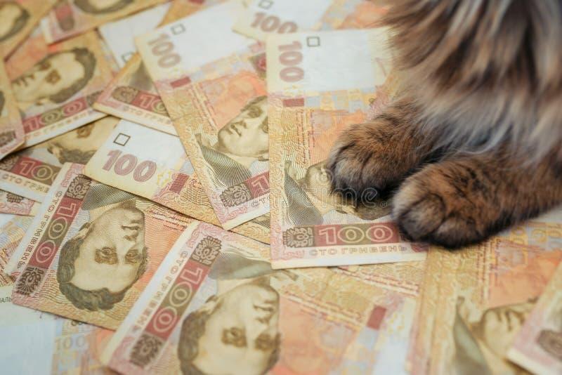El gato que miente en los billetes de banco ucranianos El gato miente en el hryvnia fotos de archivo