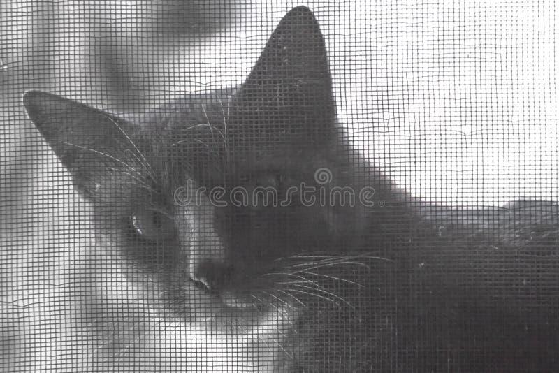 El gato que se coloca detrás de una cuerda de alambre de la ventana, que como el fondo imagenes de archivo