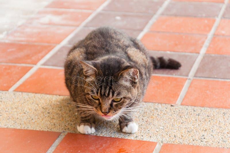El gato rayado gordo se está agachando imagenes de archivo
