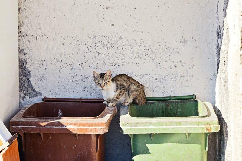 El gato rayado sin hogar del gato atigrado fino y enfermo se sienta en los cubos de la basura fotografía de archivo libre de regalías