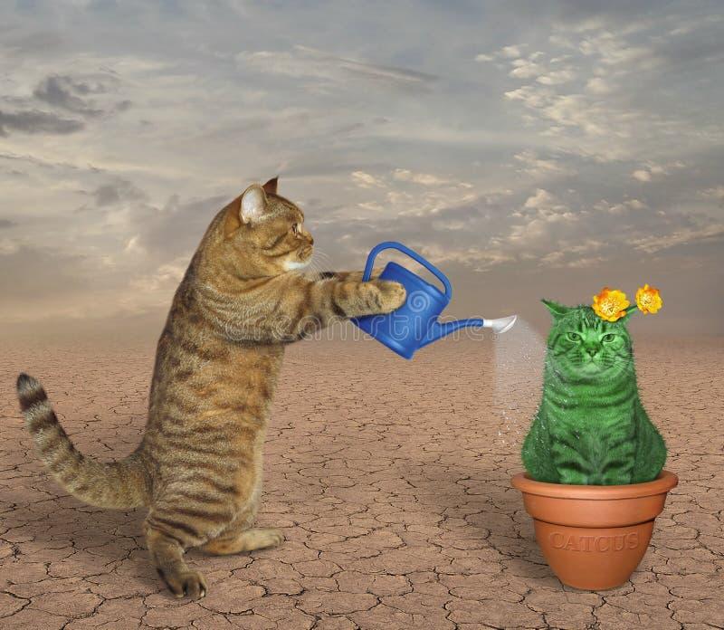 El gato riega el cactus inusual imagen de archivo libre de regalías