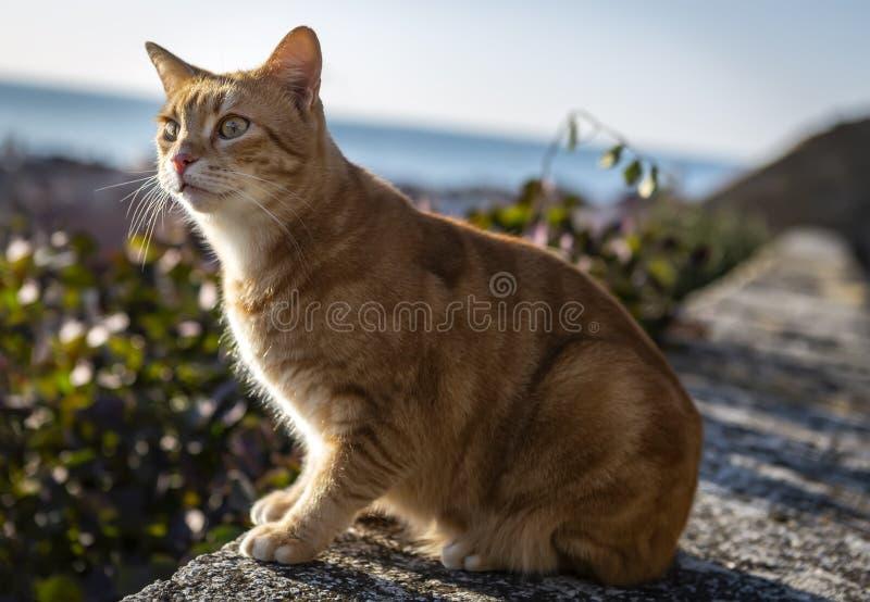 El gato rojo sentado en la pared cerca del mar fotos de archivo libres de regalías