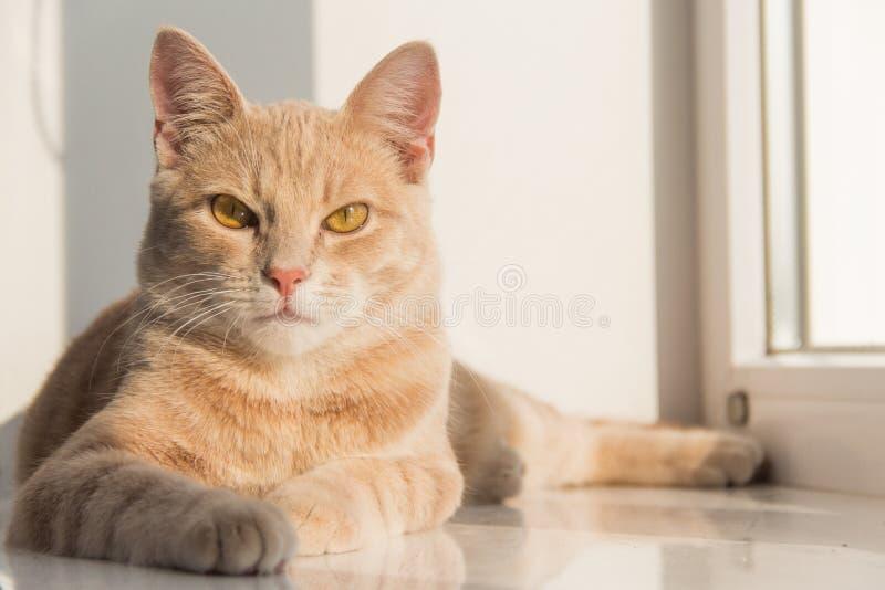 El gato se sienta en un travesaño de la ventana fotos de archivo