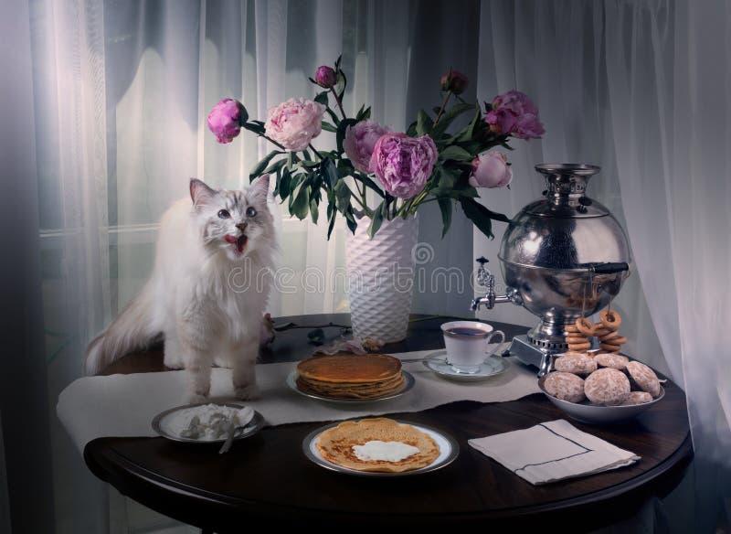 El gato siberiano ruso subió en la tabla y lamido En el samovar, las crepes, la crema agria y el té de la tabla fotografía de archivo libre de regalías