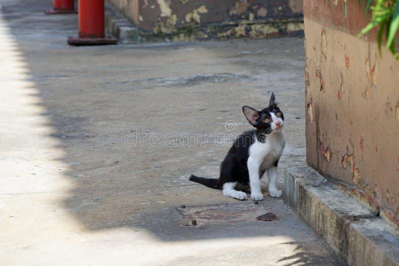 El gato sin hogar, gato del color negro mezclado blanco se está sentando en el piso fotografía de archivo