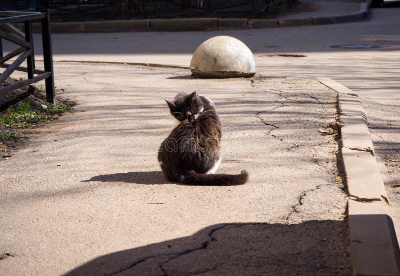 El gato sin hogar se está lavando en la calle imagenes de archivo