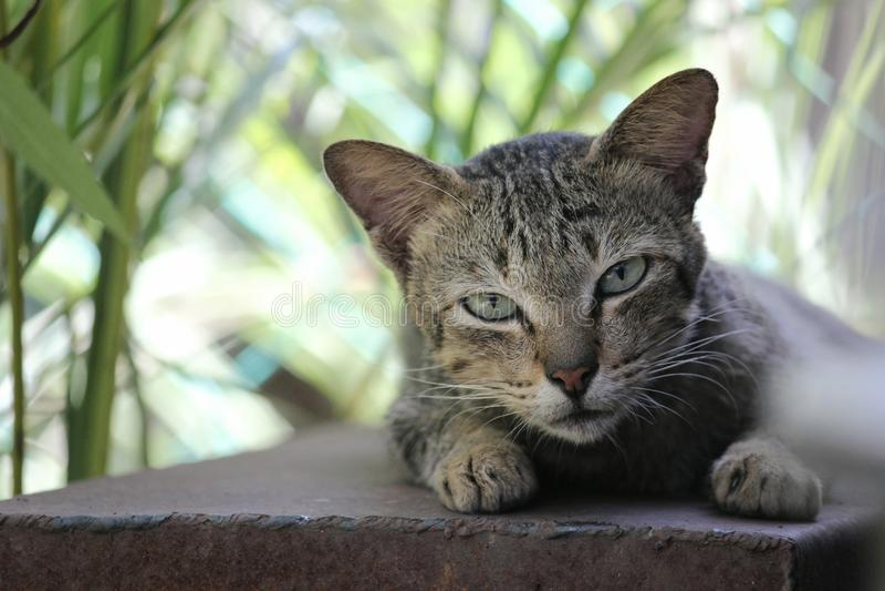 El gato soñoliento imagenes de archivo