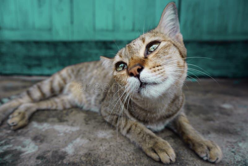 El gato solo espera al dueño para volver a casa foto de archivo