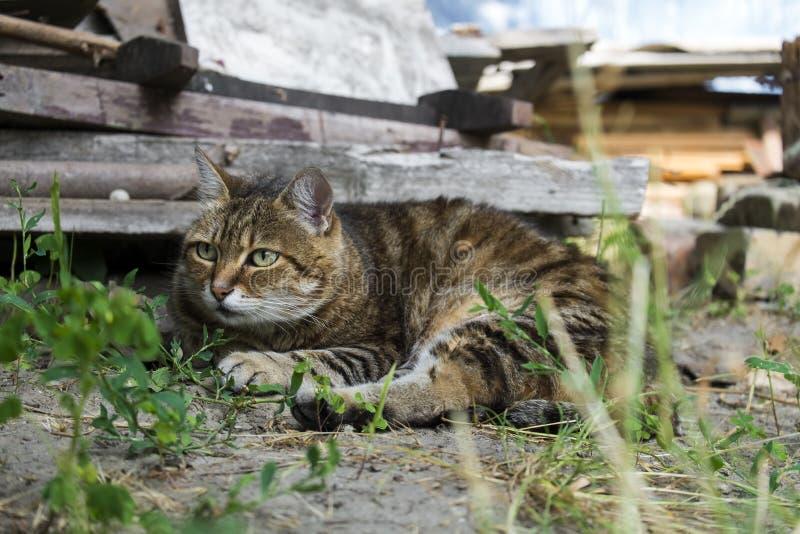 El gato Tabby estaba alarmado por algo y miró con cuidado al costado foto de archivo