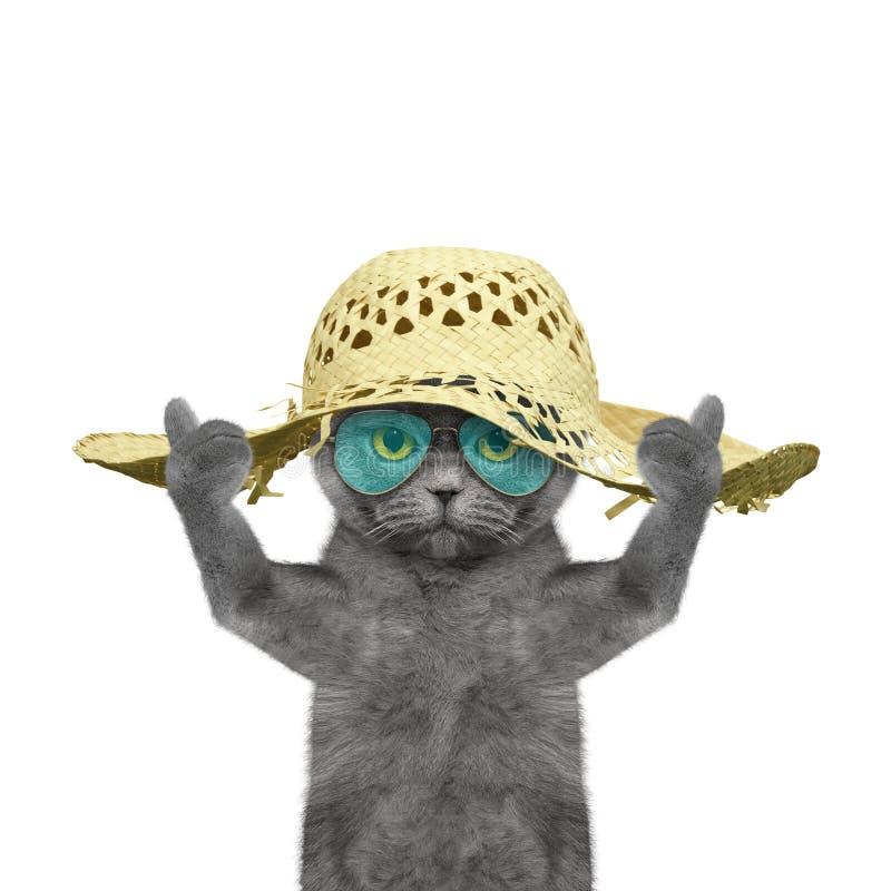 El gato tiene un resto en vacaciones de verano imagen de archivo