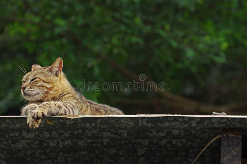 El gato toma un resto afuera foto de archivo libre de regalías