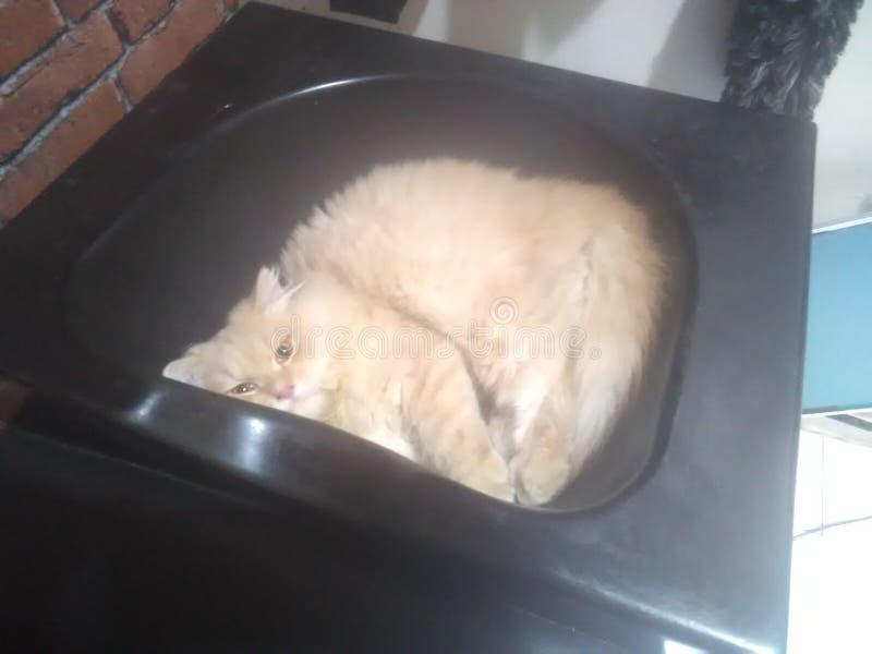 El gato toma una siesta en el fregadero imagen de archivo