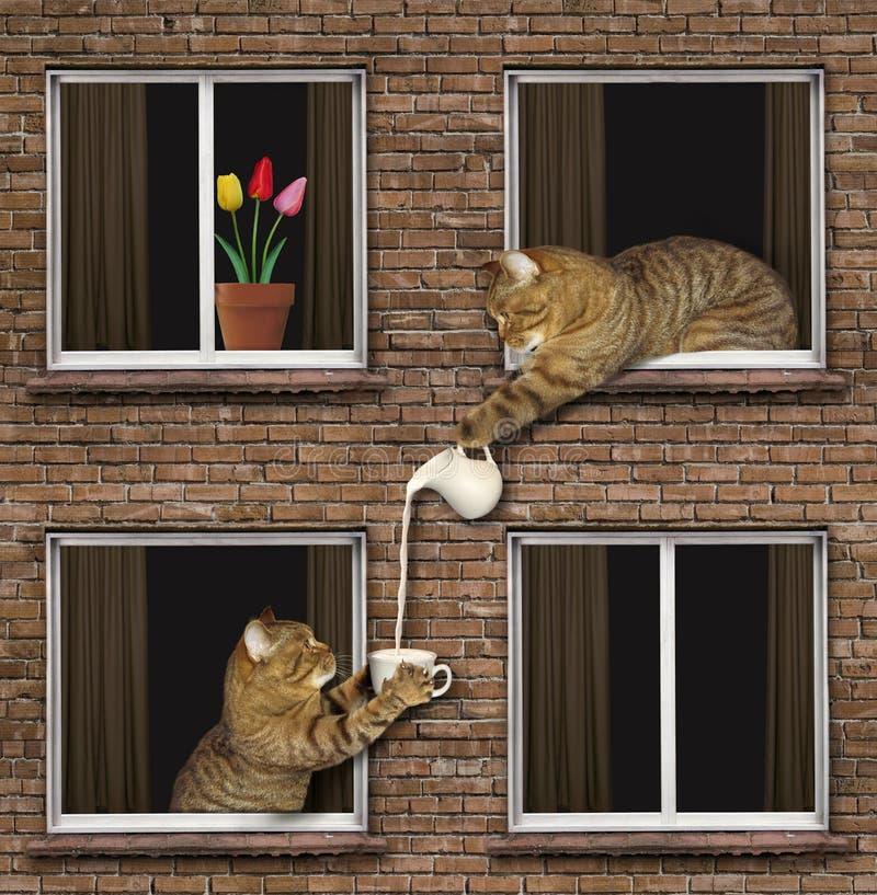 El gato trata al vecino con leche stock de ilustración