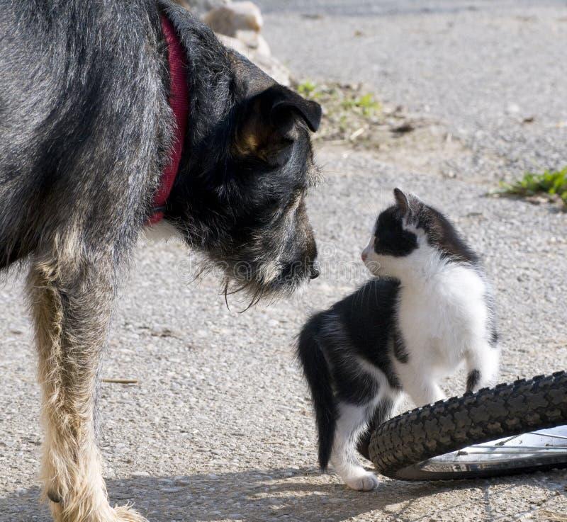 El gato y el perro consiguiendo a amigos imágenes de archivo libres de regalías