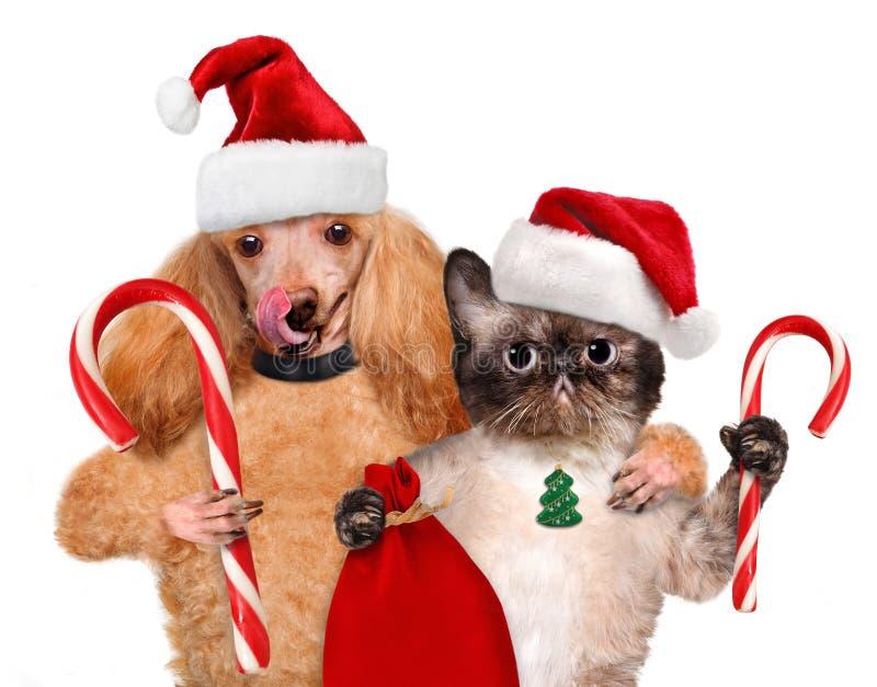 El gato y el perro en sombrero rojo sostiene un caramelo de la Navidad imagenes de archivo