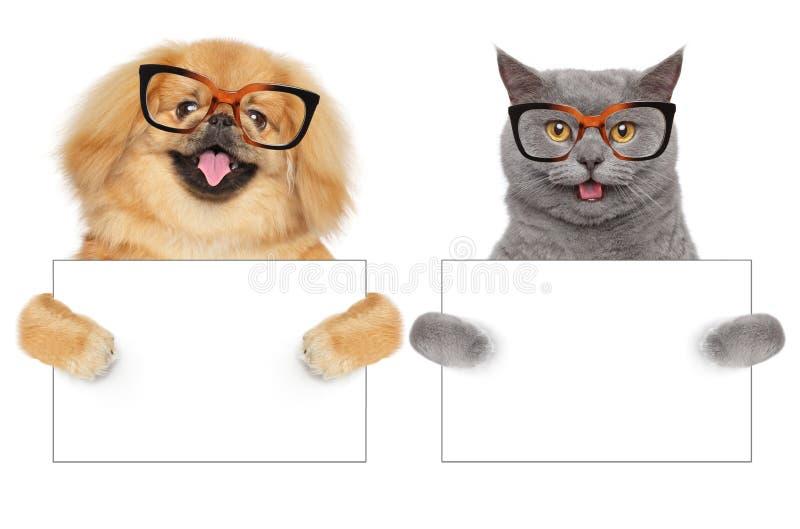 El gato y el perro en vidrios sostienen la bandera del blanco de las patas imagenes de archivo