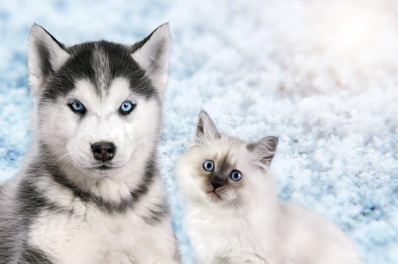 El gato y el perro juntos en el fondo brillante de la nieve ligera, mascarada del neva, husky siberiano mira derecho Humor de la  imágenes de archivo libres de regalías