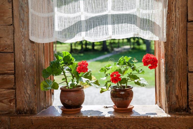 El geranio florece en la ventana de la casa de madera rural imagenes de archivo