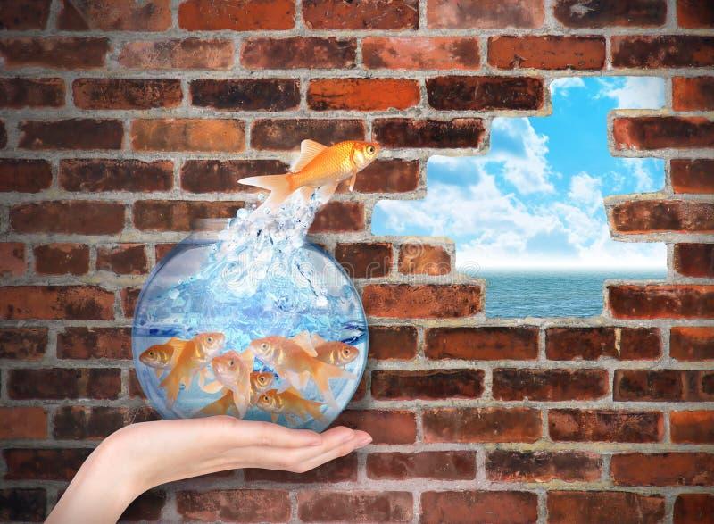 El Goldfish que salta para la oportunidad de la libertad imagenes de archivo