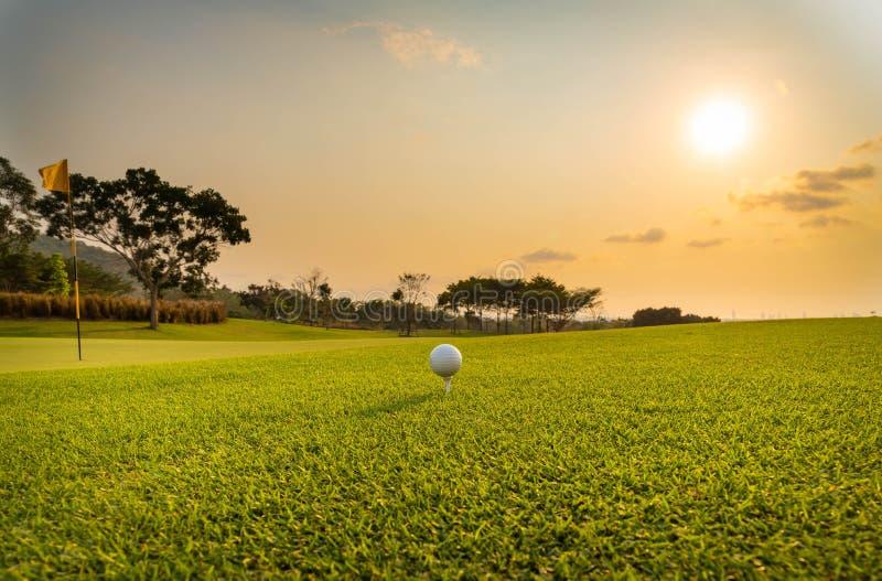 El golfista est? poniendo la pelota de golf en hierba verde en el campo de golf para que el entrenamiento agujeree con el fondo a imagen de archivo libre de regalías