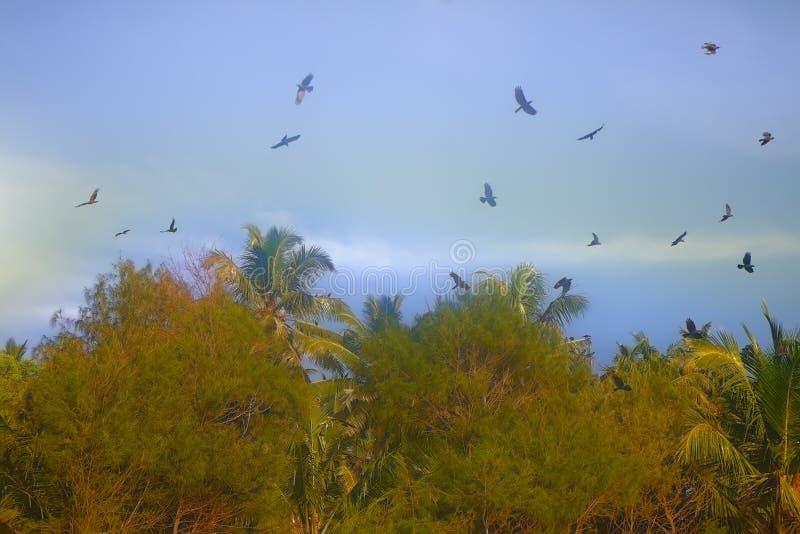 El gran número de cuervos de casa indios recolectó en arboleda de la palma imágenes de archivo libres de regalías