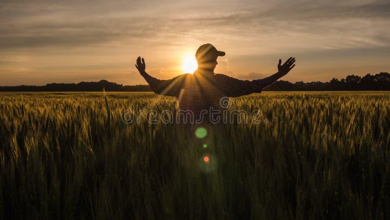 El granjero admira su campo de trigo, aumentado sus manos para arriba hacia el sol imágenes de archivo libres de regalías
