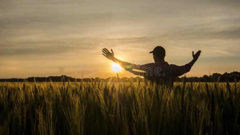 El granjero admira su campo de trigo, aumentado sus manos para arriba hacia el sol imagenes de archivo