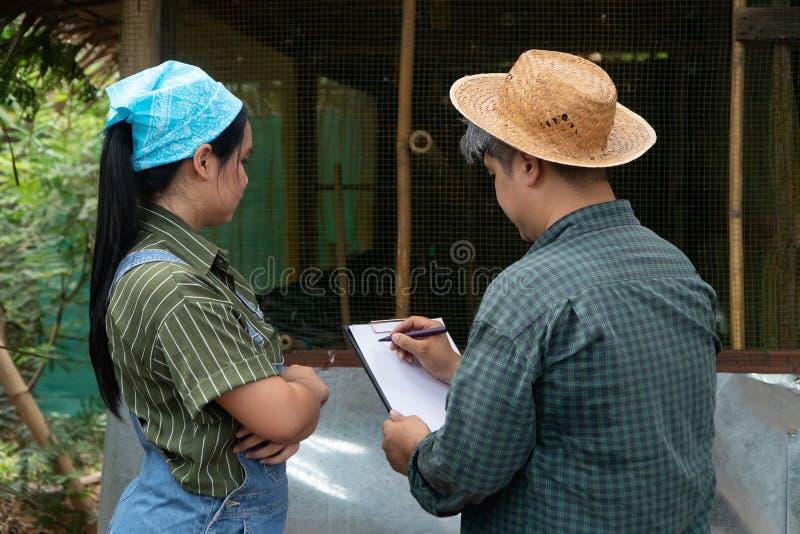 El granjero asiático del pollo es de enseñanza y de examen de las condiciones de crianza a su esposa de ponedoras para obtener la imágenes de archivo libres de regalías