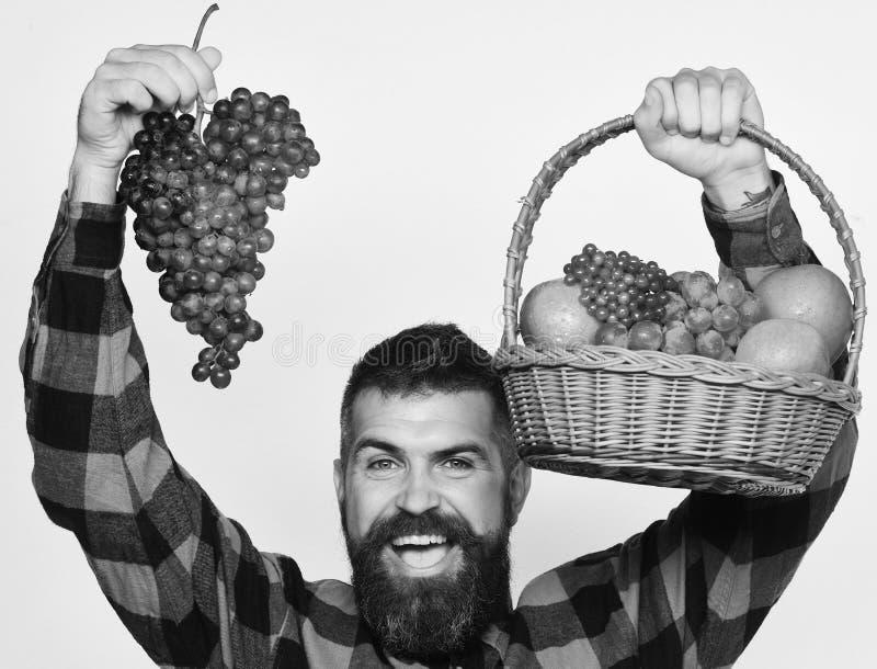 El granjero con la cara feliz presenta manzanas, los arándanos y las uvas maduras El individuo con el hombre de la cosecha con la imagenes de archivo