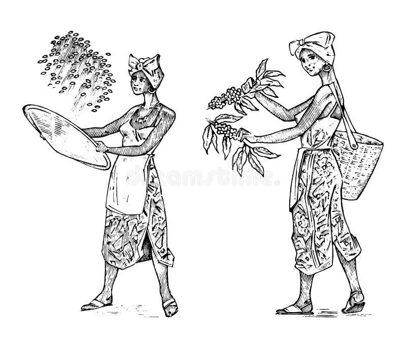 El granjero de la mujer sostiene una cesta de granos de café Arroz o plantación y cosecha asiático del cacao Trabajo en campo ven stock de ilustración