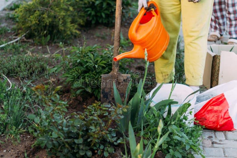 El granjero de la mujer toma el cuidado de las plantas en la plantación farming añada el fertilizante plantas de riego de una reg imagen de archivo