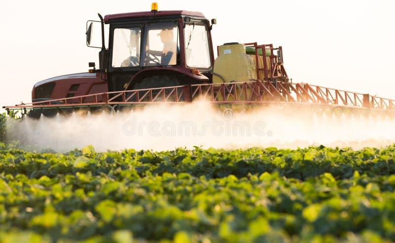 El granjero en un tractor con un rociador hace el fertilizante para la verdura joven foto de archivo libre de regalías