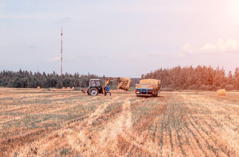 El granjero en un tractor escoge la bala del pajar y de las cargas de heno en el remolque, agricultura imagen de archivo