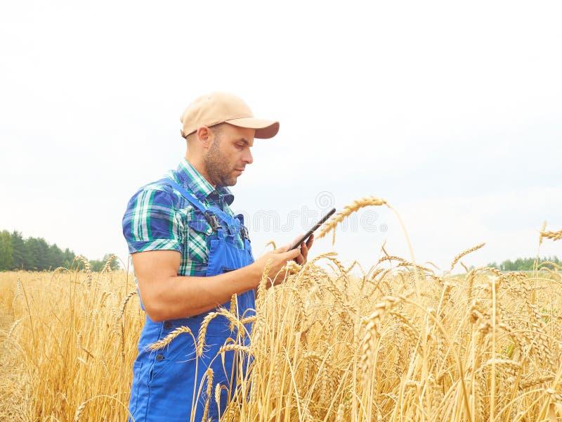 El granjero en una camisa de tela escocesa controló su campo y el trabajo en el tabl imágenes de archivo libres de regalías