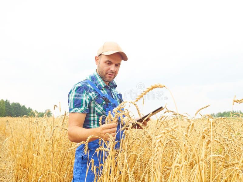 El granjero en una camisa de tela escocesa controló su campo y el trabajo en el tabl imagen de archivo libre de regalías