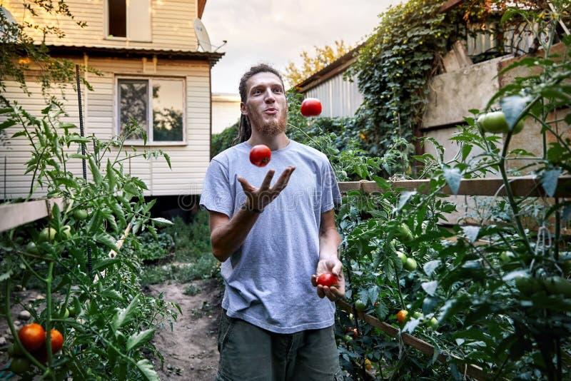 El granjero hace juegos malabares con los tomates foto de archivo libre de regalías