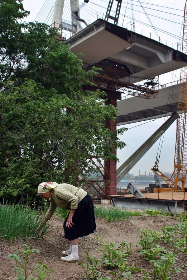 El granjero mayor de la mujer examina las plantas plantadas en campo, sobre el puente fotos de archivo libres de regalías