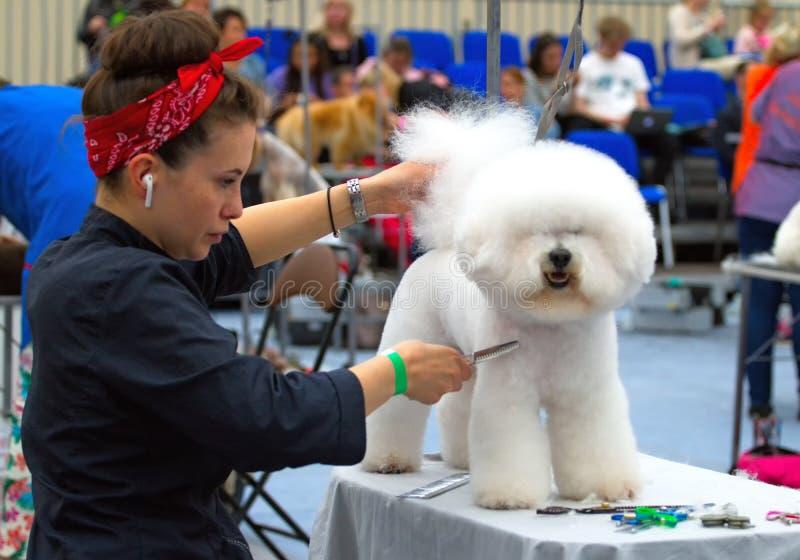 El Groomer est? cortando un pelo de perro fotos de archivo libres de regalías