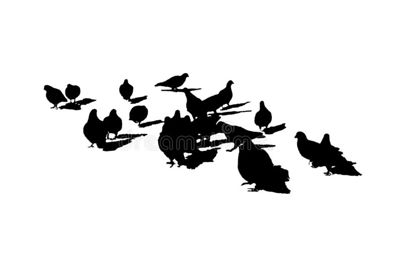 El grupo de gaviotas aisló la silueta gráfica stock de ilustración