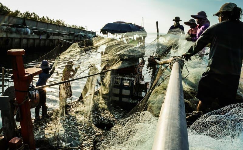 El grupo de pescadores despeja pescados de la red fotografía de archivo libre de regalías