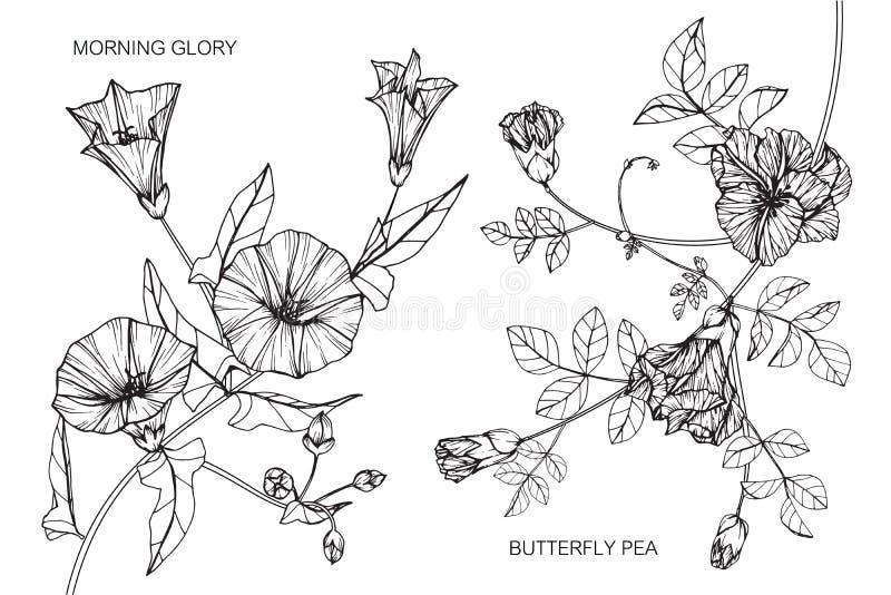El guisante de la correhuela y de mariposa florece el dibujo y el bosquejo libre illustration