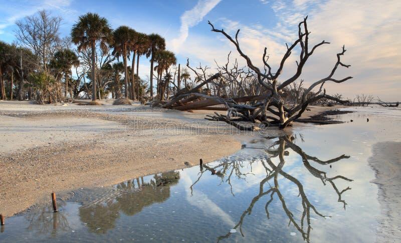 SC marítimo del coto del bosque de la playa de la bahía de la botánica foto de archivo libre de regalías