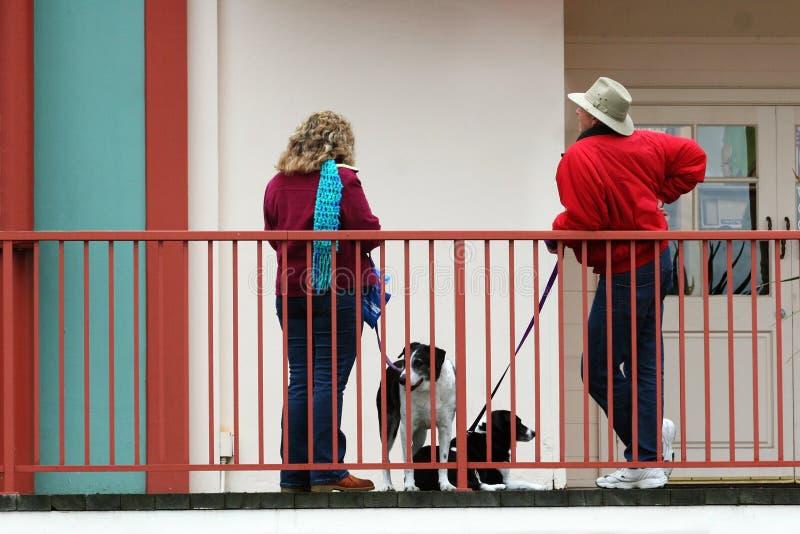 El hablar de los amantes del perro fotos de archivo libres de regalías