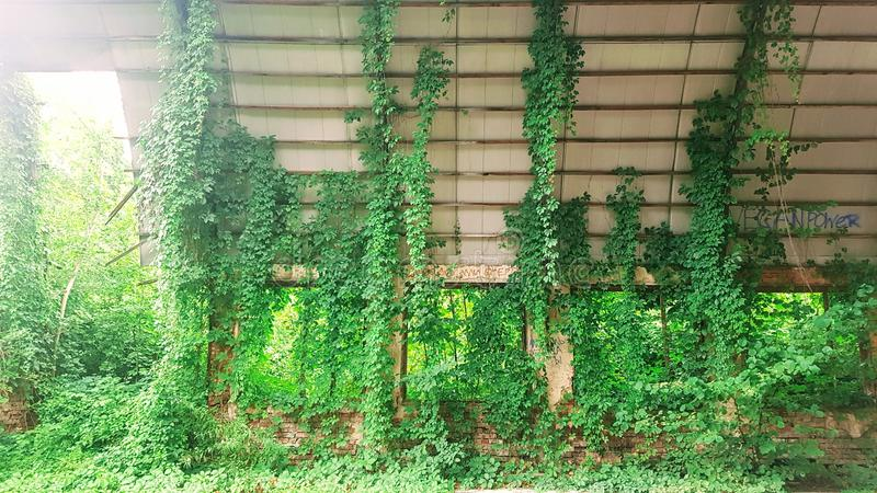 El hangar destruido fue crecido demasiado con los arbustos fotografía de archivo