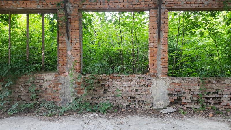El hangar destruido fue crecido demasiado con los arbustos foto de archivo libre de regalías