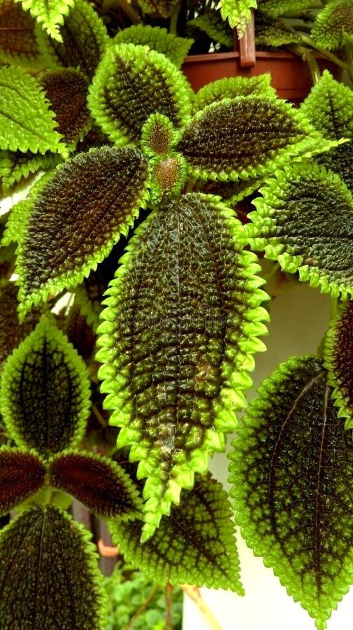 El helecho de un houseplant con verde largo se va foreground imagenes de archivo
