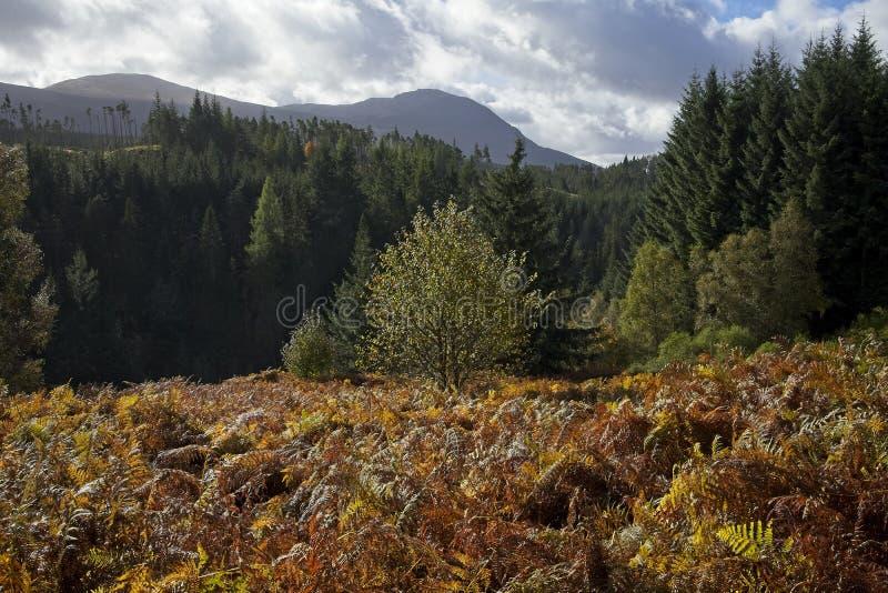 El helecho del otoño colorea las montañas escocesas fotos de archivo libres de regalías