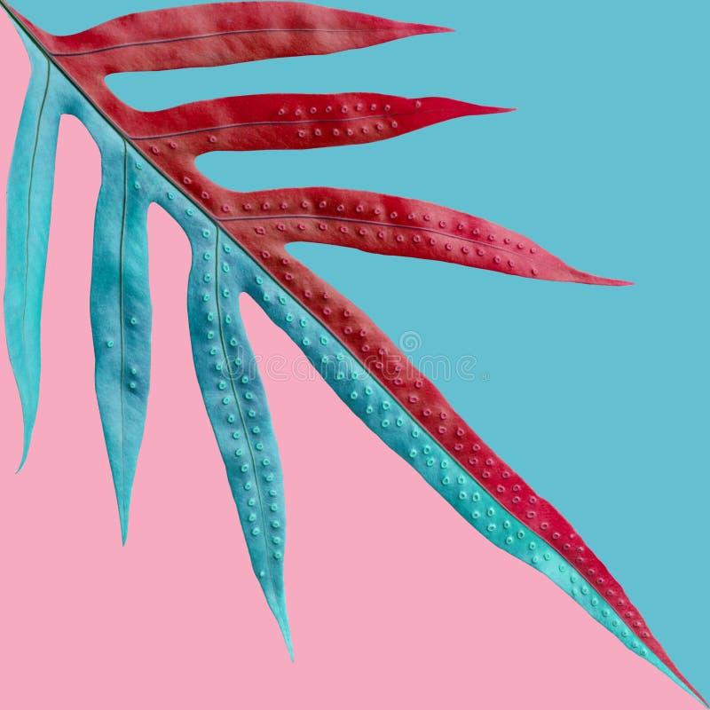 El helecho tropical deja el modelo en fondo del color en colores pastel Naturaleza fotografía de archivo