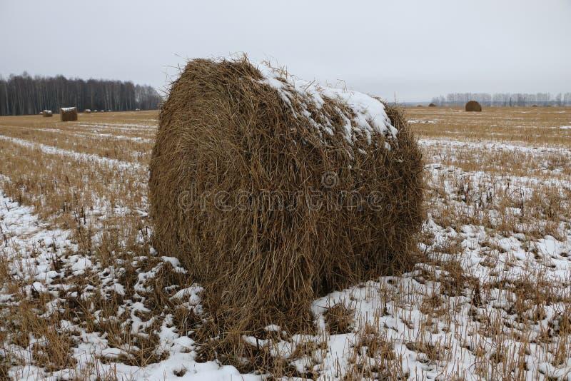 El heno rueda en la nieve en un campo arado foto de archivo